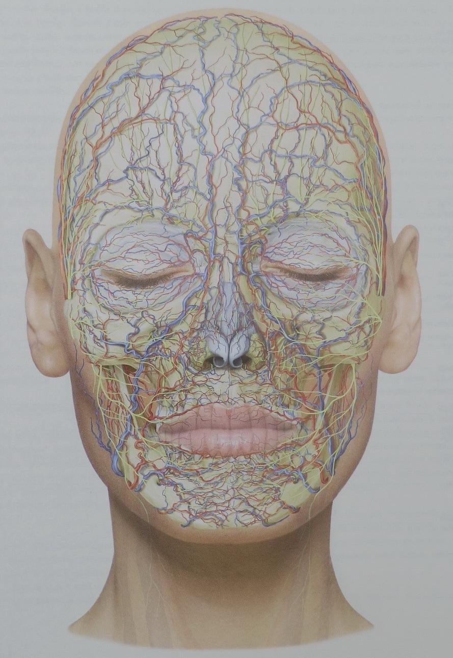 Артерии, вены и нервы - на все это дарсонваль влияет благотворно