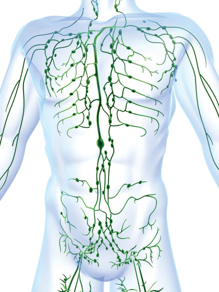 лимфоузлы тела
