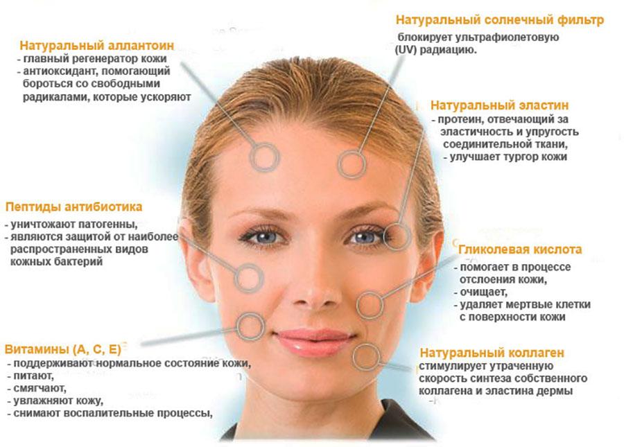 Основные воздествия улиткотерапии на кожу человека