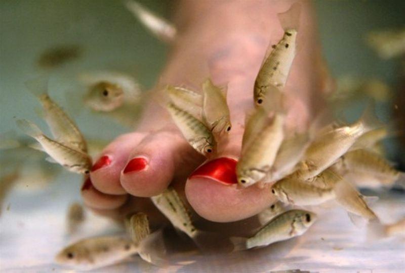Домашний СПА с рыбками Гарра Руфа